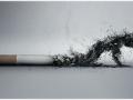 fumo15